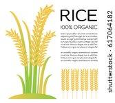 rice on white background... | Shutterstock .eps vector #617064182