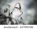 silhouetted stems of a...   Shutterstock . vector #617096786