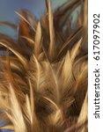 closeup detail of chicken...   Shutterstock . vector #617097902