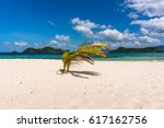 Small Palm Tree On Beach...