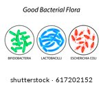 good bacterial flora.... | Shutterstock .eps vector #617202152