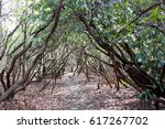 Whimsical Wooded Trail With A...