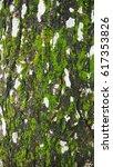 green moss on tree trunk for... | Shutterstock . vector #617353826