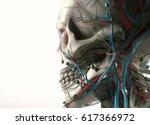 human anatomy jaw  cheek and... | Shutterstock . vector #617366972