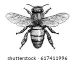 bee illustration  drawing ... | Shutterstock .eps vector #617411996