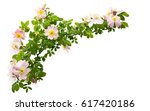 rose hip flower isolated on... | Shutterstock . vector #617420186