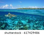 over and under sea surface with ... | Shutterstock . vector #617429486