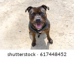 dog  english staffordshire bull ... | Shutterstock . vector #617448452