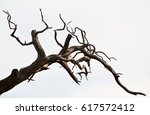 dead branches of a tree | Shutterstock . vector #617572412