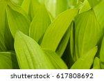 green leaf | Shutterstock . vector #617808692