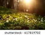 spring awakening of flowers and ... | Shutterstock . vector #617819702