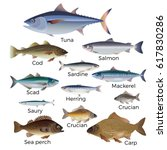 commercial fish species. vector ... | Shutterstock .eps vector #617830286