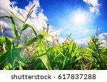 Corn Field With The Bright Sun  ...