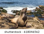 a seal family on the beach  .... | Shutterstock . vector #618046562