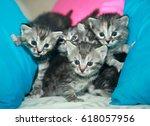 Stock photo cute fluffy cats 618057956