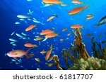 Beautiful Tropical Fish On A...