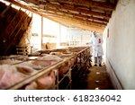veterinarian examining pig farm ...   Shutterstock . vector #618236042