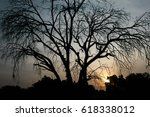 dry trees on sunset | Shutterstock . vector #618338012