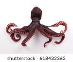 octopus wiggling isolated on... | Shutterstock . vector #618432362