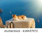 Orange Cat Basks In The Sun On...