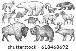 Stock vector animals of north america big set polar bear coyote puma skunk wolverine horned antelope 618468692