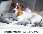 photo of dog  stand with... | Shutterstock . vector #618577592