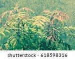 heavy rain on a beautiful... | Shutterstock . vector #618598316