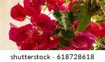 flor   azalia | Shutterstock . vector #618728618
