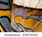 """butterfly wing close up""... 