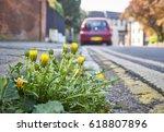 Dandelion Weeds Growing In The...