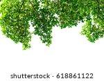 green leaves isolated on white... | Shutterstock . vector #618861122