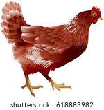 hen realistic color vector...   Shutterstock .eps vector #618883982