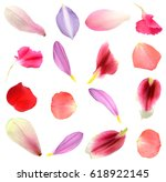 Stock photo assorted flower petals in seasonal 618922145