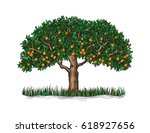 the isolated orange tree with... | Shutterstock .eps vector #618927656