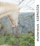 Small photo of portrait of albino half-wild horse. Israel