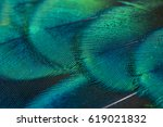 close up peacock feathers | Shutterstock . vector #619021832