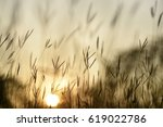 grass flower silhouette with... | Shutterstock . vector #619022786