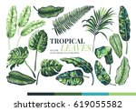 Tropical Palm Leaves And ...