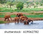 huge male african elephant | Shutterstock . vector #619062782