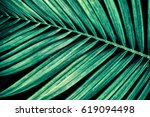tropical palm leaf  nature... | Shutterstock . vector #619094498