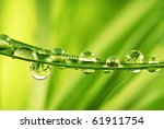 Grass And Beautiful Water Drops