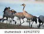 the common crane  grus grus  ... | Shutterstock . vector #619127372