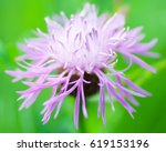 Milk Thistle Purple Flower...
