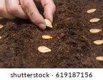 gardener's hand seeding pumpkin ...   Shutterstock . vector #619187156