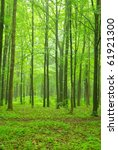 sgreen forest | Shutterstock . vector #61921300