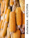 Yellow Corn For Food Processing