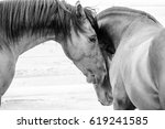 Stock photo close up of a thorough bred horse in a pen 619241585