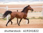 Stock photo close up of a thorough bred horse in a pen 619241822
