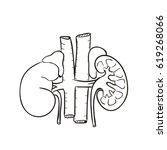 kidney illustration | Shutterstock .eps vector #619268066