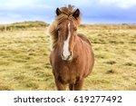 icelandic horses. the icelandic ... | Shutterstock . vector #619277492